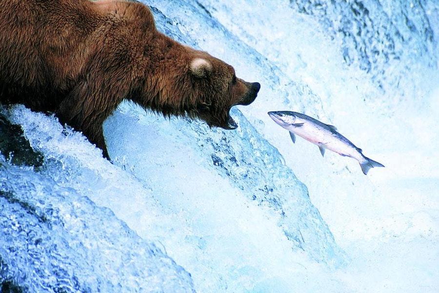 Alaska Tenant-Landlord Law